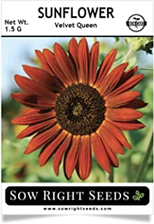 Sow Right Seeds - Velvet Queen Sunflower Seed for Planting- Full Packet with Instructions, Beautiful Non-GMO Heirloom Flower to Plant, Wonderful Gardening Gift (1 Packet)