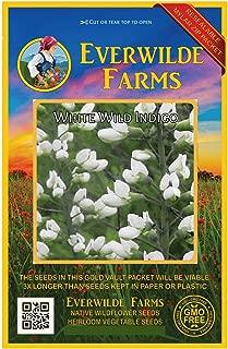 Everwilde Farms - 150 White Wild Indigo Native Wildflower Seeds - Gold Vault Jumbo Seed Packet