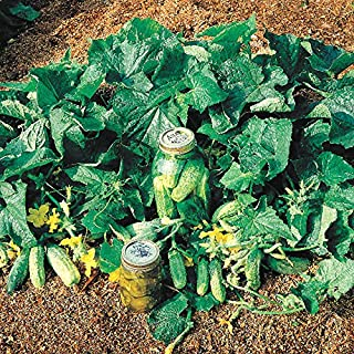 bush pickle