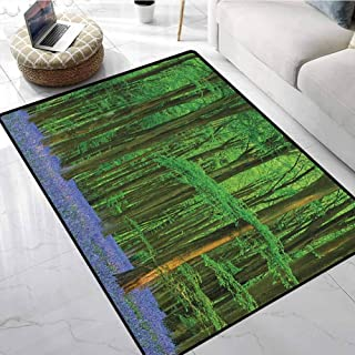 Woodland Farmhouse Style Area Rugs 5x7 ft Spring Sunshine in a Bluebell Wood Summer Dream Holiday Getaway Destination Floor mats for Kitchen