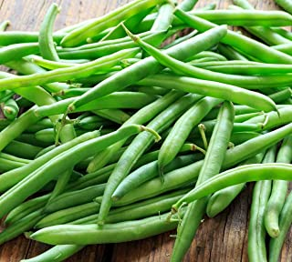 Blue Lake Bush Green Bean Seeds, 50+ Premium Heirloom Seeds, Fantastic Addition to Home Garden!, (Isla's Garden Seeds), Non GMO Organic, 90% Germination Rates, 100% Pure, Highest Quality Seeds