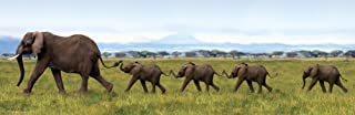 Best elephants linking trunks and tails Reviews