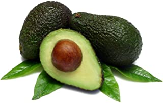Lula Avocado Tree - Grow Indoors or Out - 10