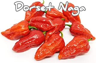 SVI (25+) Dorset naga Pepper Seeds