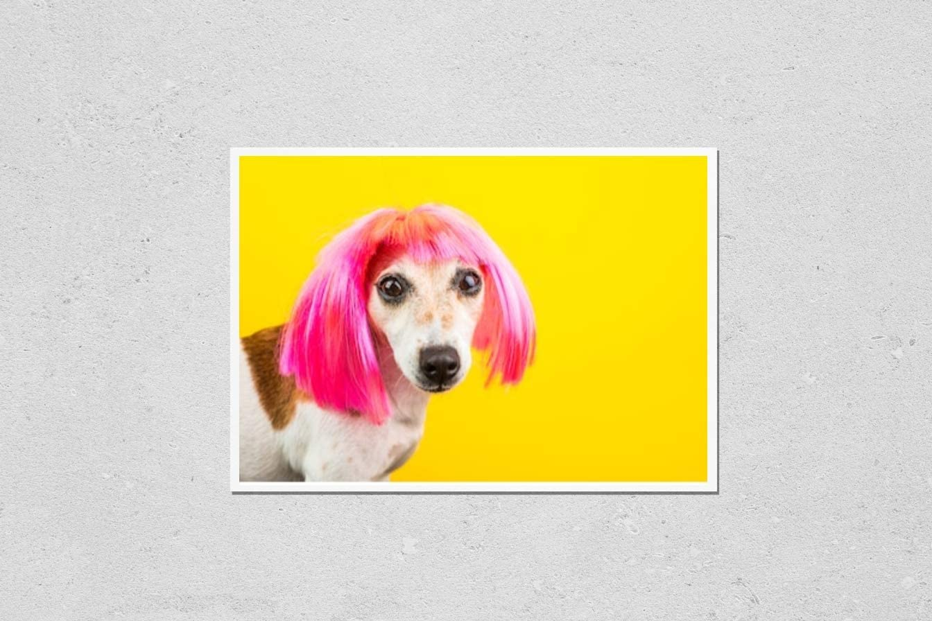 KwikMedia Poster Reproduction of Dog fashinable in 2021 autumn and winter new Yel Wig. Regular discount Pink