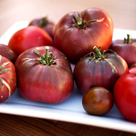 Brandywine RED Tomato 30-2000 Seeds Heirloom Open Pollinated fresh Non-GMO Big