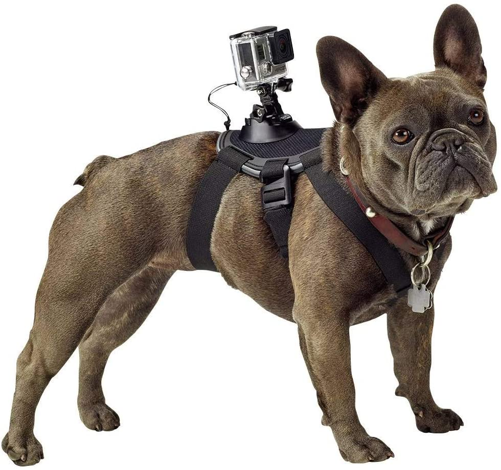 arnés para perro GoPro