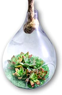 Fat Plants San Diego Hanging Glass Teardrop Succulent Terrarium with Rope Complete Kit, Green