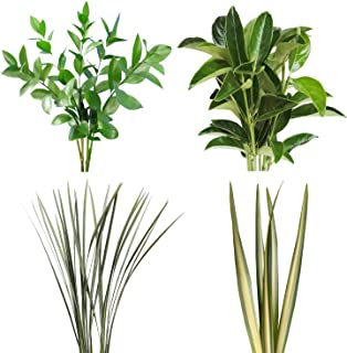 Assorted Varieaged Flax, Variegated Lily Grass, Viburnium, Green Flax and Ruscus Combo Box