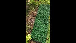 12pcs Boxwood Panels 24 X16 Artificial Faux Hedge Plant For 31 Sq Feet Per Boxwood Hedge Set Use For Uv Protection Indoor Outdoor Fence Privacy Screen Grass Wall Greenery Backdrop