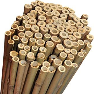 2FT 3FT 4FT 5FT 6FT Bamboo Garden Canes Strong Thick Quality