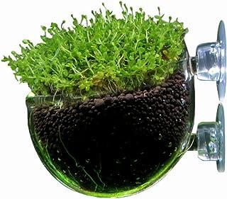 アクアリウム 水槽 水草 種 (1個)