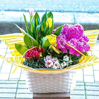 母の日 季節のおまかせ寄せ鉢 鉢花 お任せ種類でバスケットに鉢花が綺麗に寄せ植えされているのでそのまま飾るだけ (Lサイズ, 5~7種類をおまかせで寄せ鉢)
