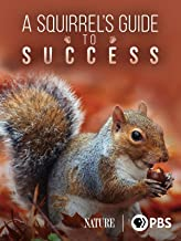 A Squirrel's Guide to Success
