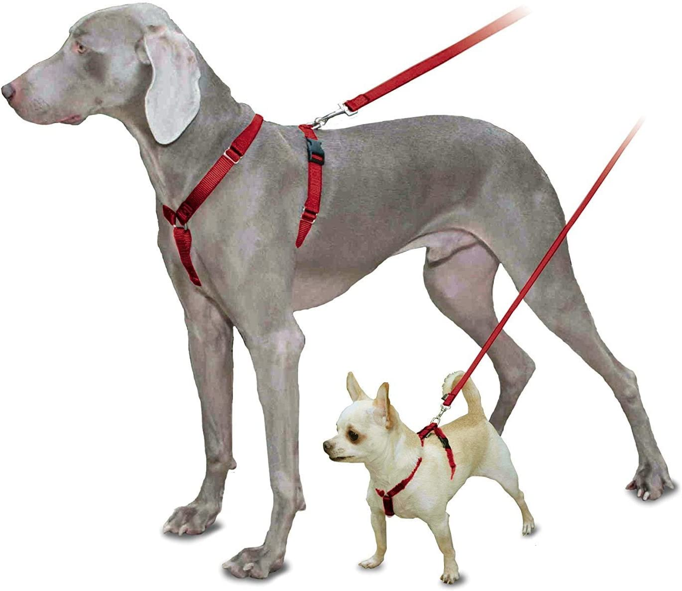 Max 84% OFF PetSafe Sure-Fit Harness Adjustable the Dog from Makers Discount mail order