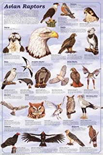 Laminated Avian Raptors Birds of Prey Educational Science Print Poster 24x36