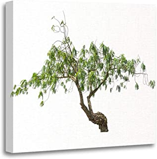 Semtomn Canvas Wall Art Print Agasta Sesban Vegetable Humming Bird Tree Butterfly Agati Sesbania Artwork for Home Decor 16 x 16 Inches