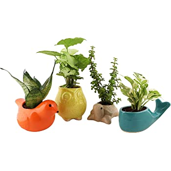 Leafy Tales Animal Kingdom Ceramic Pot Set of 4, Pot Only | Home Décor | Multicolor, Color May Vary