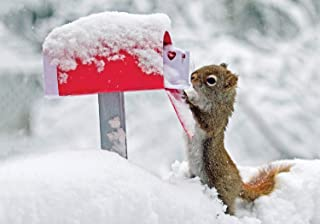 Squirrel's Greetings Boxed Holiday Half Notecards