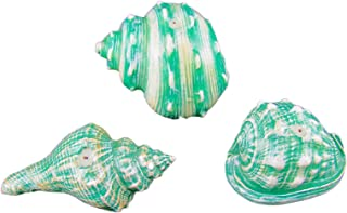 Best seashell shaped candles Reviews