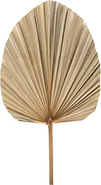 ELITE FLORAL (2 PC) Dried Palm Leaf Fan Decor Trimmed Palm Leaves (Oval Shape) Real Palm Spears Organic Palm Leaf for Wedding