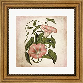 Vintage Trumpet Vine by Bluebird Barn Framed Art Print Wall Picture, Wide Gold Frame, 19 x 19 inches