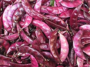 Seeds Market Rare Red Ruby Moon Hyacinth Bean Seeds, Seeds 8, organic vegetables