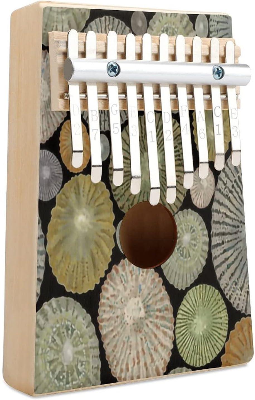Opihi Cheap mail order shopping Shells Large Scale Kalimba Piano 10 Ranking TOP4 Thumb Finger Key