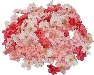 pink sakura flower