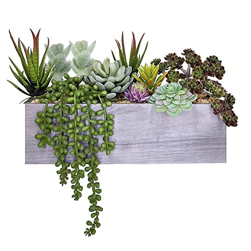 Succulents Arrangements Amazon Com