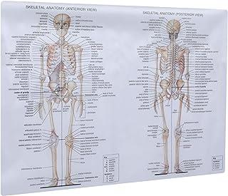 ULTECHNOVO Skelettsystem anatomiskt diagram mänsklig anatomi affisch muskelskelett nervös målning undervisning bildhjälp f...