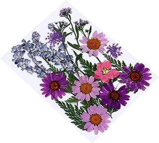 Artibetter 1 Ensemble de Fleurs Séchées Pressées Fleurs Mélangées Séchées pour Bricolage Résine Bijoux Signet Art Fabricat...