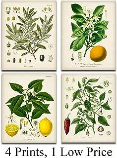 Kitchen Botanicals Illustrations - Set of 4-11x14 Unframed Art Prints - Great Kitchen Decor and Gift Under $25 for Nature Lovers