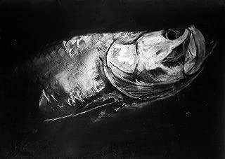 Tarpon Charcoal Drawing Wall Art Print Hand Signed By Jack Tarpon, Silver King, Tarpon Fish Artwork
