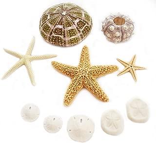 Florida Shells & Gifts: Sea Life Sampler: Sea Urchin, Starfish and Sand Dollars (10 pcs) Beach Decor Art