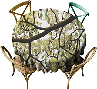 one1love Waterproof Table Cover Farmhouse Dogwood Tree Seeds Bonsai Art Decorations Home Accessories Nature Lover Bright Sky Digital Print Stain Resistant, Washable 50 INCH Green Brown Off White