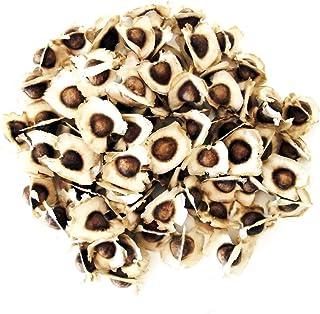 500 Sementes de Moringa Oleifera Orgânicas Para Plantio e Mudas