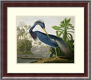 Framed Wall Art Print Louisiana Heron, from 'Birds of America', Engraved by Robert Havell, 1834 by John James Audubon 25.50 x 22.50