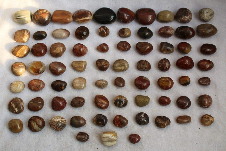 1 year warranty Crystal Natural Huge Red Petrified Stone Wood Popular popular Specimen