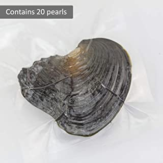 ToGames Women Jewelry Round Pearl Decoration Vacuum Packing Individually Wrapped Mussel One Oyster with Live Pearls Good Gift