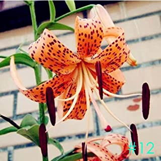 Elever 50pcs Perfume Lily Bulbs Seeds Rare Lilium Flower Seeds Bonsai Potted Plant Perennial Flowers Seeds