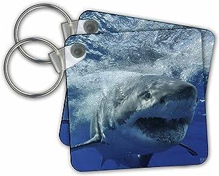 3dRose Great White Shark Key Chains, Set of 2 (kc_10587_1)