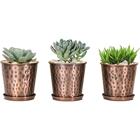 Monarch Abode 20610 Copper Finish (Set of 3) Indoor Flower Succulent Pots Planter with Drainage Hole