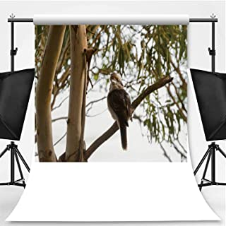 Laughing Kookaburra Photography Backdrop,Largest Kingfisher Bird in Brown Perching Near on Gum Tree Branch in Tasmania for Television,Pictorial Cloth:5x7ft