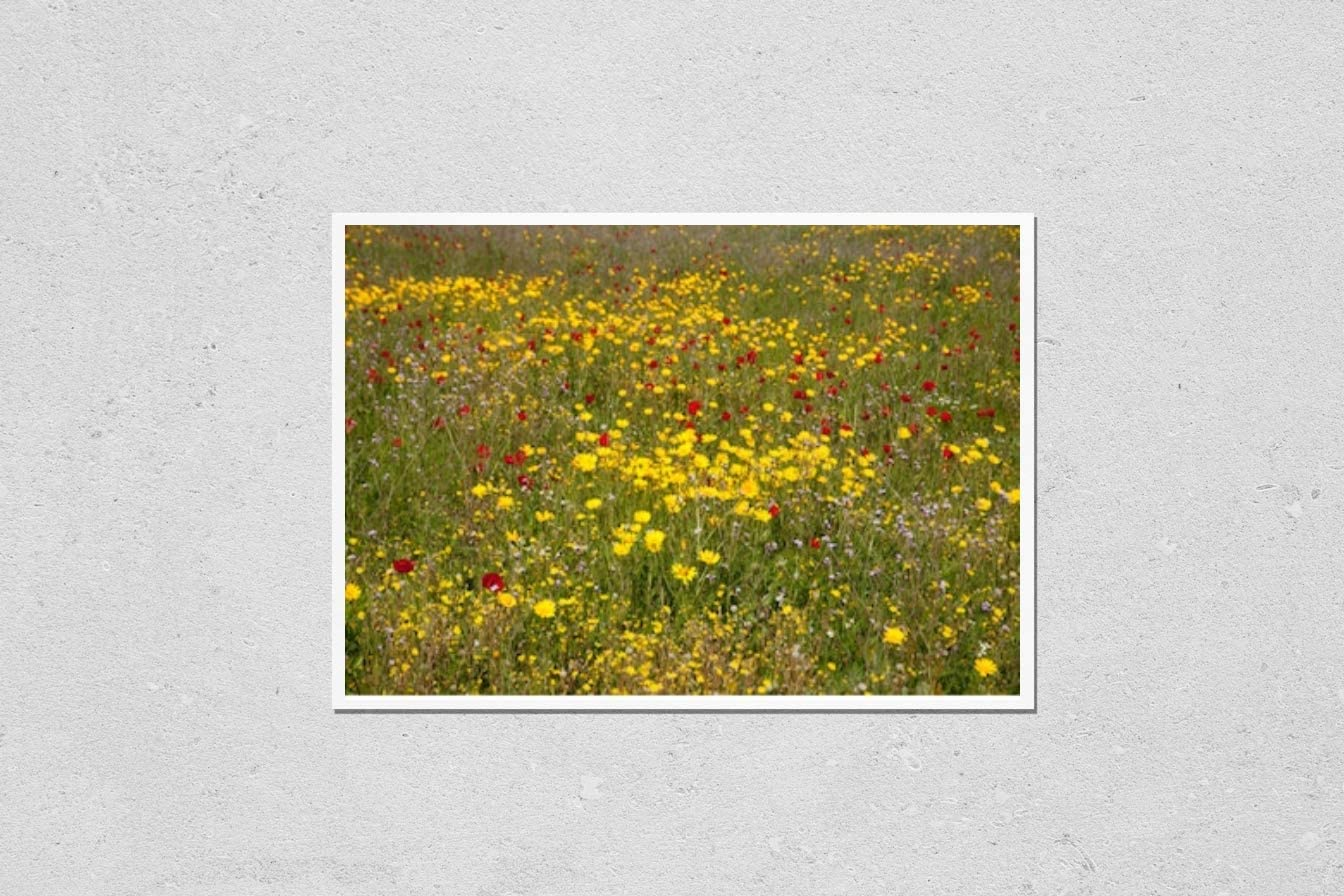 KwikMedia Poster Reproduction of Beautiful Flowers Max 41% OFF Natur New product in Wild