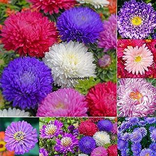 Portal Cool Paquete de se as: Campanilla de invierno Galanthus Se as Bulbos de otoño creciente cultivo de flores de primavera Clsv 03
