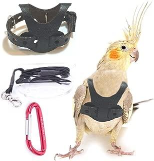 Avianweb EZ Rider Bird Harness with 8 Ft Leash