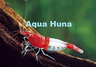 Red Rili Shrimp - Aquarium Shrimp 8 Pack