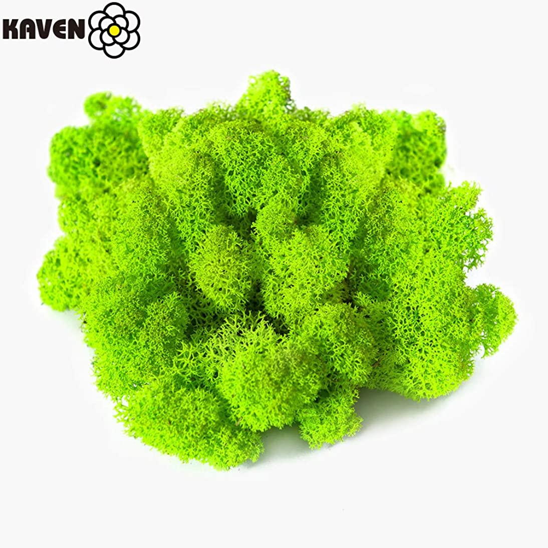 Moss Preserved, Chartreuse Moss for Fairy Gardens, Terrariums, Any Craft or Floral Project or Wedding Other Arts (Chartreuse 8.8oz)