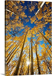 Colorado, Near Steamboat Springs, Buffalo Pass, Yellow Aspen Tree Canopy Canvas Wall Art Print.